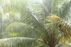 Tropical rain forest. Severe Thunderstorms on the beach Stock Photo