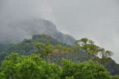 Tropical rain forest, Taiwan. Morning mist. Stock Images