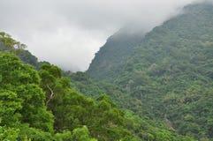 Tropical rain forest, Taiwan. Morning mist. Royalty Free Stock Photos
