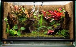 Tropical rain forest terrarium or pet vivarium rack. Tropical rain forest terrarium. Pet tank vivarium for exotic frogs, lizards or gecko royalty free stock images