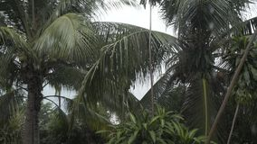 Tropical rain forest tree palms summer time Thai Thailand rainforest, natural, outdoor, water. Palms foliage, summer, leaf, exotic, environment, botanical, park stock video