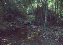 Tropical rain forest, trees, water Royalty Free Stock Images