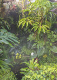 Tropical rain forest Royalty Free Stock Photos