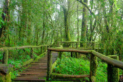 Tropical rain forest Stock Images