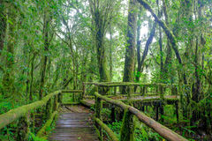 Tropical rain forest Royalty Free Stock Image