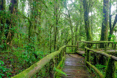 Tropical rain forest Royalty Free Stock Photography