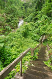 Tropical rain forests Stock Photos