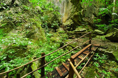 Tropical rain forests Stock Images