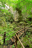Tropical rain forests Stock Image