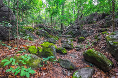Tropical rain forests. Are abundant in thailand Royalty Free Stock Photos