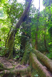 Tropical rain forests. Are abundant in thailand Stock Photo