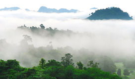 Tropical rain forests,Ratchapraph a National Park Stock Photo