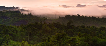 Tropical rain forests,Ratchapraph a National Park Royalty Free Stock Photography
