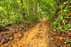 Tropical rain forests,Ratchapraph a National Park Stock Image