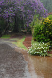 Tropical rain in garden. Royalty Free Stock Photo