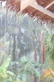 Tropical rain in jungle Royalty Free Stock Image