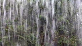 Tropical rain in the jungle. A Tropical rain in the jungle stock video