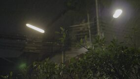Tropical Rain Pours at Night. Strong winds and rain shook the trees in dark night. Tropical rain falling on tree leaves and asphalt road, peaceful nature stock video footage