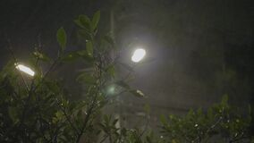 Tropical Rain Pours at Night. Strong winds and rain shook the trees in dark night. Tropical rain falling on tree leaves and asphalt road, peaceful nature stock video