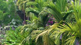Tropical rain, rainstorm or thunderstorm raining in a green jungle or rain forest environment. With palm trees stock video footage