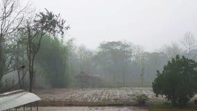 Tropical Rain. Rural scene of tropical rain in summer season stock footage