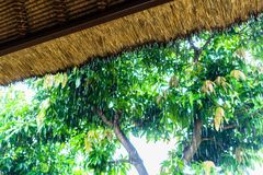 Tropical rain on straw roof as seen from shelter Royalty Free Stock Image