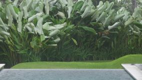 The tropical rain and strong wind swings palm trees in the tropical resort.  stock footage