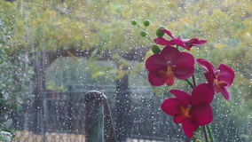 Tropical Rain stock video