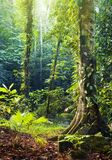 Tropical Rainforest Stock Images