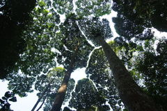 Tropical rainforest. A canopys of trees in a tropical rainforest Stock Photo