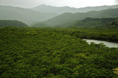 Tropical Rainforest. Rainforest with river in the tropics. An untouched wilderness Royalty Free Stock Photography