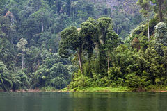 Tropical rainforest. In Khao Sok National Park in Thailand Royalty Free Stock Photos