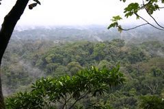 Tropical rainforest royalty free stock photos