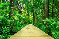 Tropical rainforest in asia with wood walk way, Krabi, Thailand Stock Photos