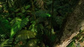 Tropical Rainforest. Asian tropical jungle stock image