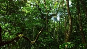 Tropical Rainforest. Asian tropical jungle royalty free stock photos