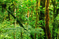 Tropical rainforest. Beautiful tropical rainforest of Central America Stock Image