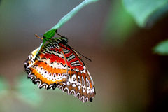 Tropical Rainforest Butterfly Royalty Free Stock Photos