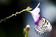Tropical Rainforest Butterfly Stock Photography