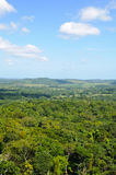 Tropical Rainforest Canopy Royalty Free Stock Photos