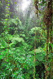 Tropical Rainforest, Costa Rica Stock Images