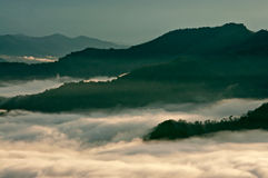 Tropical rainforest covered with mist on an early morning. Stock Photos