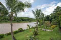 Tropical Rainforest Flora and Navua River. Navua River with lush, tropical rainforest flora including palm trees under a blue sky with clouds in Suva, Fiji stock photography