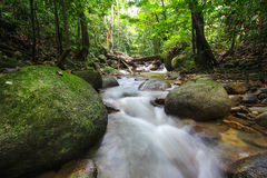 Tropical rainforest freshwater Stock Photos