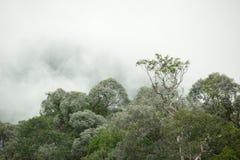 Tropical rainforest in  Hala-Bala Wildlife Sanctuary of Thailand. Nature background Stock Photo