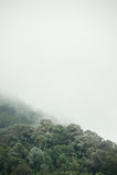 Tropical rainforest in  Hala-Bala Wildlife Sanctuary of Thailand. Nature background Stock Photography