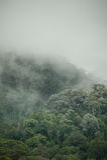 Tropical rainforest in  Hala-Bala Wildlife Sanctuary of Thailand. Nature background Royalty Free Stock Image