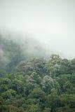 Tropical rainforest in  Hala-Bala Wildlife Sanctuary of Thailand. Nature background Royalty Free Stock Photo