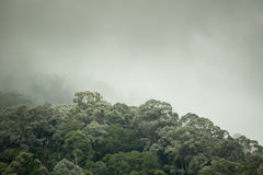 Tropical rainforest in  Hala-Bala Wildlife Sanctuary of Thailand. Nature background Stock Images