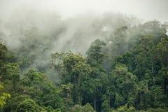 Tropical rainforest in  Hala-Bala Wildlife Sanctuary of Thailand. Nature background Royalty Free Stock Photos